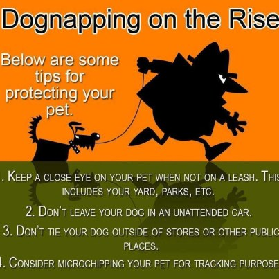 Keep your pooch protected.