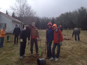 Planting peach, apricot and plum trees.