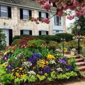 spring garden on Van Ness. 4.28.14